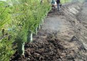 04_plantations_gal2.JPG